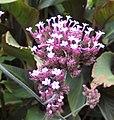 Flower (30308262011).jpg