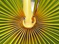 Folha da Palmeira - panoramio.jpg
