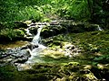 Fontaine des Tufs - Dessus (Les Planches-près-Arbois) (2).jpg