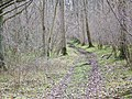 Footpath, Knighton Wood - geograph.org.uk - 711253.jpg
