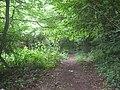 Footpath in Norton's Wood - geograph.org.uk - 1361262.jpg