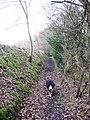 Footpath past High Meadow Farm - geograph.org.uk - 1201979.jpg
