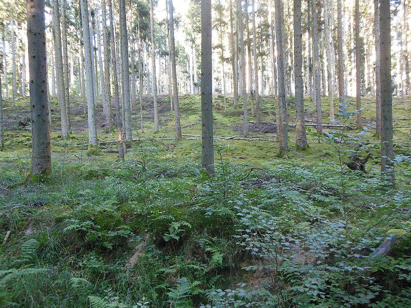 Butten Forest