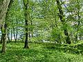 Forest - panoramio - paulnasca (100).jpg