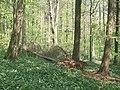 Forest Fawr, nr Tongwynlais - geograph.org.uk - 410445.jpg