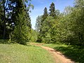 Forest path - panoramio (1).jpg