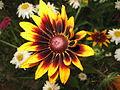 Fotky květů (50).jpg