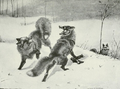 Foxfight.png