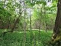 Frühling Wald und Pflanzen.jpg