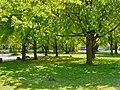 Frühling sehr grün.jpg