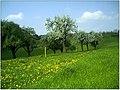 Frühlingsfarben - Allmendsberg - panoramio (1).jpg