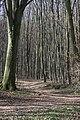 Frühlingsrundwanderung Schmücke bei Heldrungen - panoramio (3).jpg