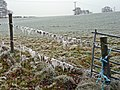 Frozen fleece on a fence near Kixley - geograph.org.uk - 1107809.jpg