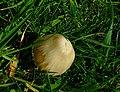 Fungi - geograph.org.uk - 444744.jpg