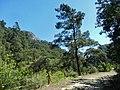 Göynük Kanyon - panoramio (6).jpg