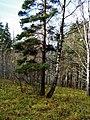 G. Miass, Chelyabinskaya oblast', Russia - panoramio (82).jpg