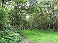 GOC Berkhamsted & Frithsden 022 Ashridge Estate (27850567093).jpg