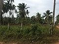 Gampaha, Sri Lanka - panoramio (1).jpg