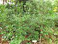 Gardenology.org-IMG 2316 rbgs11jan.jpg