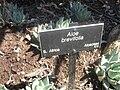 Gardenology.org-IMG 2387 hunt0903.jpg