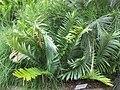 Gardenology.org-IMG 2570 rbgs11jan.jpg