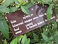 Gardenology.org-IMG 8062 qsbg11mar.jpg