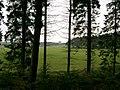 Gartarry Wood - geograph.org.uk - 242229.jpg