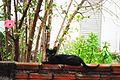 Gato preto no muro.JPG