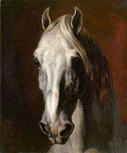 Tête de cheval blanc est un tableau à l'huile sur toile du peintre français Théodore Géricault, daté de 1815, et conservé au musée du Louvre. Ce portrait montre une tête de cheval claire au regard profond, surgissant d'un fond sombre.