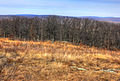 Gfp-missouri-taum-sauk-mountain-state-park-trees-on-the-horizon.jpg