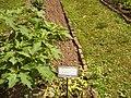 Giardino botanico di Brera (Milan) 153.jpg