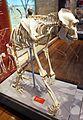 Gorilla skeleton.jpg