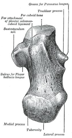 spricka i hälen skelettet