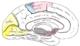 Gehirn von medial