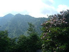 Great Smoky Mountains Overlook