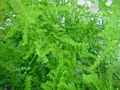 Green fern plant bush.jpg