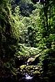 Green heaven (48807192017).jpg