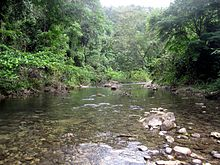 A river running through lowland forest in the Solomon Islands