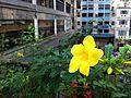 HK 上環 Sheung Wan 水坑口街 Possession Street footbridge plant yellow flower Nov-2013 view Arion Commercial Centre.JPG