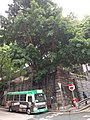 HK SYP 西環 Sai Ying Pun 東邊街 Eastern Street 五福里 near 第一街 First Street April 2020 SS2 06.jpg