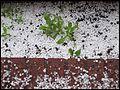 Hailstorm - Tormenta de granizo (4349533161).jpg