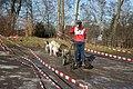 Halver - Schlittenhunderennen 23 ies.jpg