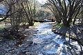 Harrietville Ovens River 003.JPG