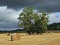 Harvested farmland, Hambleden - geograph.org.uk - 963305.jpg