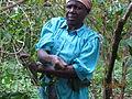 Harvesting coffee in Uganda.JPG