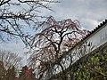 Hasedera Temple 長谷寺 - panoramio (14).jpg