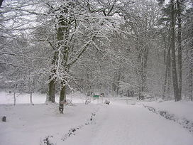 Snow covering the woods of Hazlehead Park