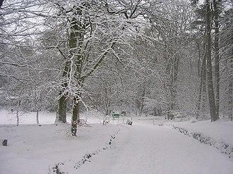 Hazlehead Park - Image: Hazlehead Woods