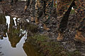 Headquarters Battalion hikes to quell holiday hunger DVIDS345043.jpg