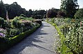 Herbaceous borders, National Botanic Gardens, Glasnevin - geograph.org.uk - 66248.jpg